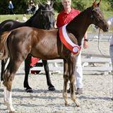 Straight Horse Senator 2.jpg