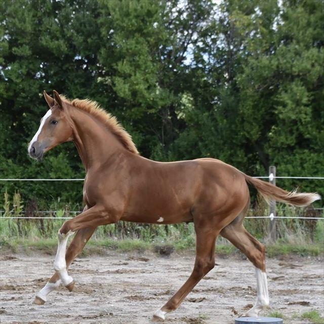 JAXSON BY IN HORSES
