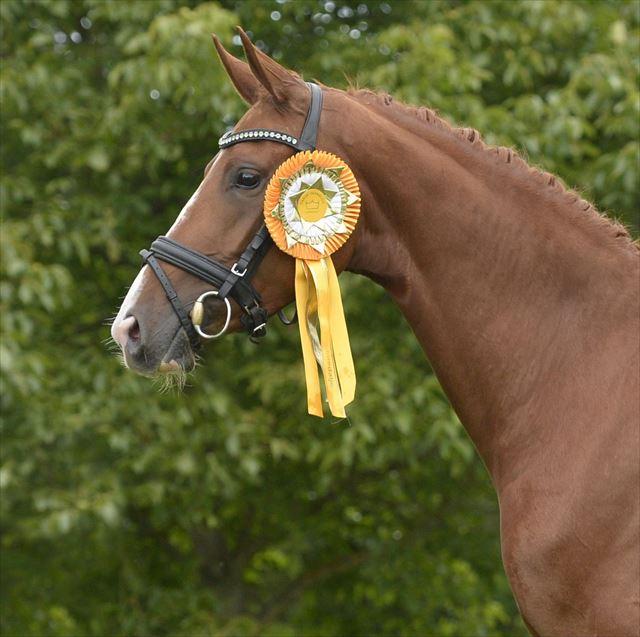 STRAIGHT HORSE DE MILLA