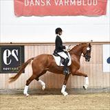 traight Horse De Milla.jpg