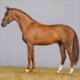 STRAIGHT HORSE SIR ROMANCE 1.jpg