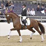 Straight Horse Sir Romance.jpg