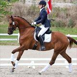 STRAIGHT HORSE ROZINA 2.jpg