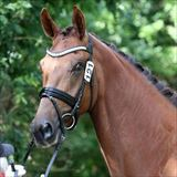 STRAIGHT HORSE ROZINA.jpg