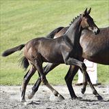 Straight Horse Roxy Music.jpg