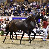 Straight Horse Roxy Music 2.jpg