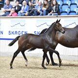 Straight Horse Roxy Music 1.jpg
