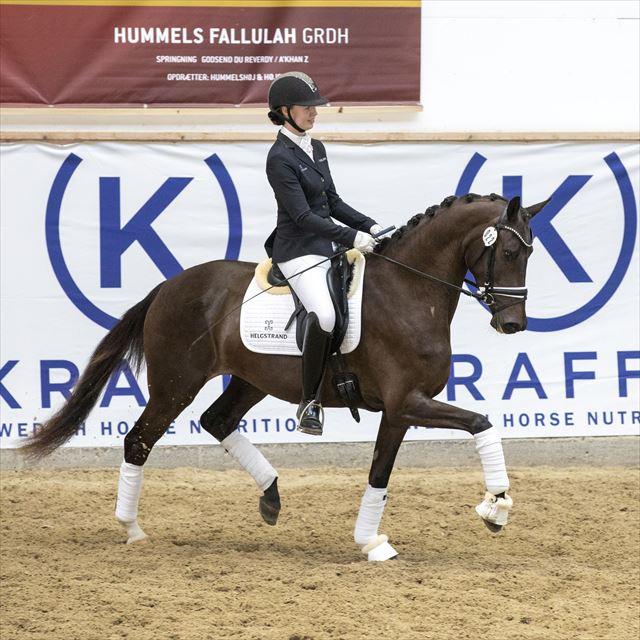 STRAIGHT HORSE FLORIANA