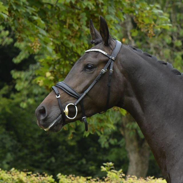 Straight Horse Ascenzione
