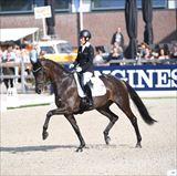 Straight Horse Ascenzione 2.jpg
