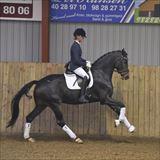 Straight Horse Zackonik 1.jpg
