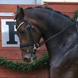Straight Horse Zackonik.jpg