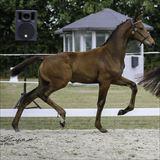 Straight Horse Savannah 2.jpg