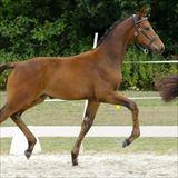Straight Horse Savannah.jpg